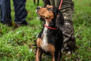 Gundog training London