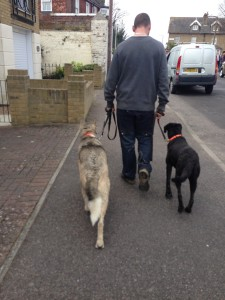 Anxious dogs, dog socialisation