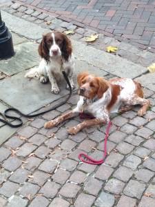 Dog socialisation,dog behaviour, my dog won't stay