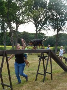 Agility dog training Kent