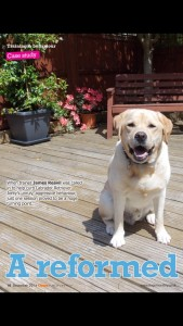 Dogs monthly magazine article james Reavil