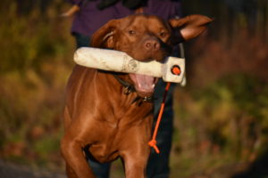 rebelritsi photography gundog training