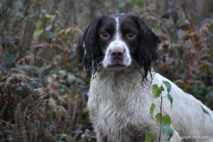 rebelritsi photography Gundog training kent