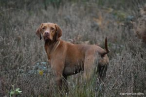 rebelritsi photography Gundog photography training kent
