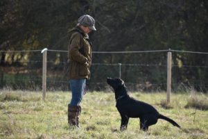 ghundog training kent