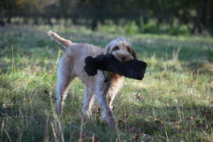 rebelritsi photography Hpr Gundog training kent