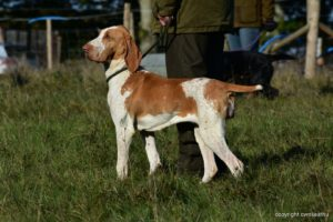 gundog training rebelritsi photography
