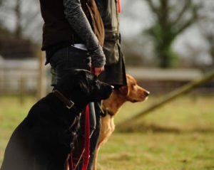 group Gundog training