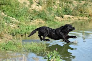 water retrieve
